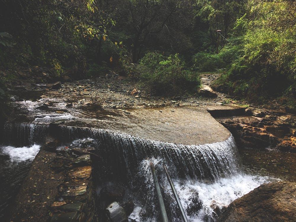 agua, arboles, bosque