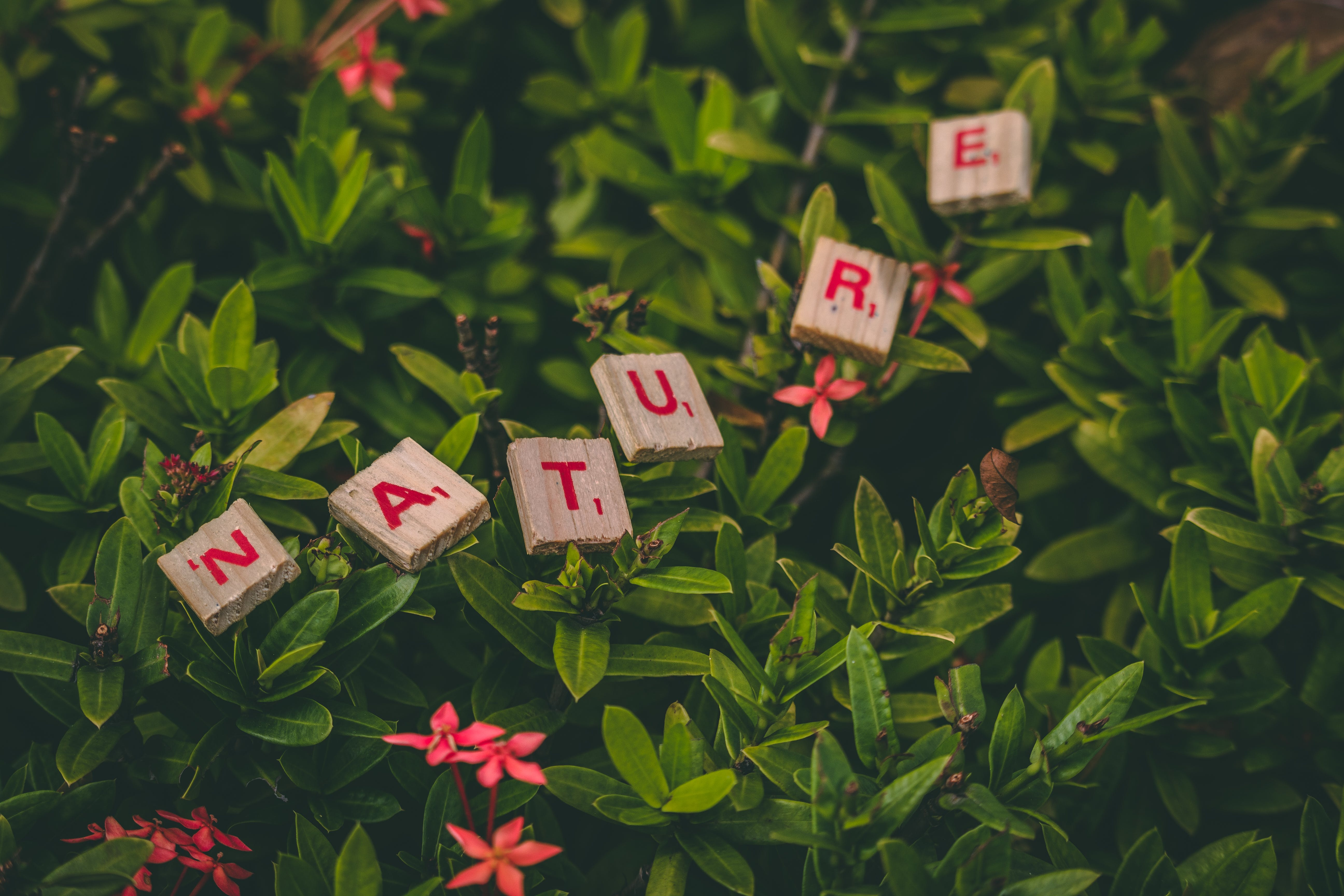 Scrabble Pieces Forming Nature Word