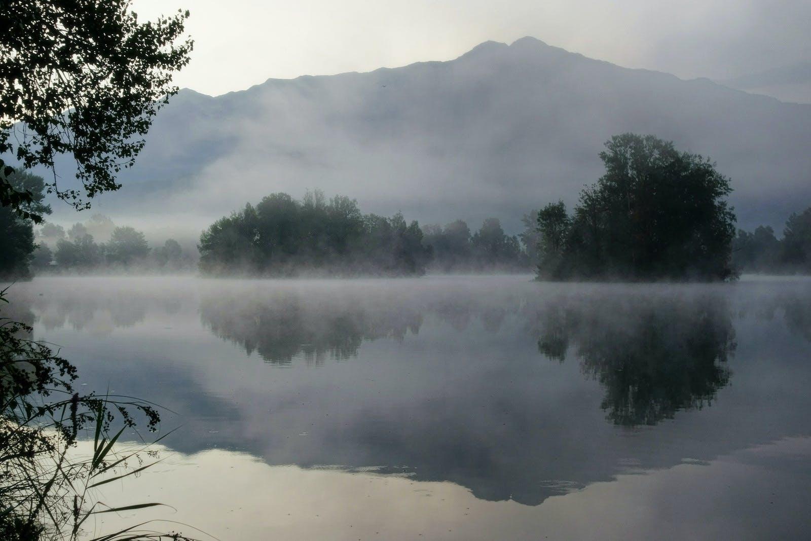 bäume, nebel, reflektierung