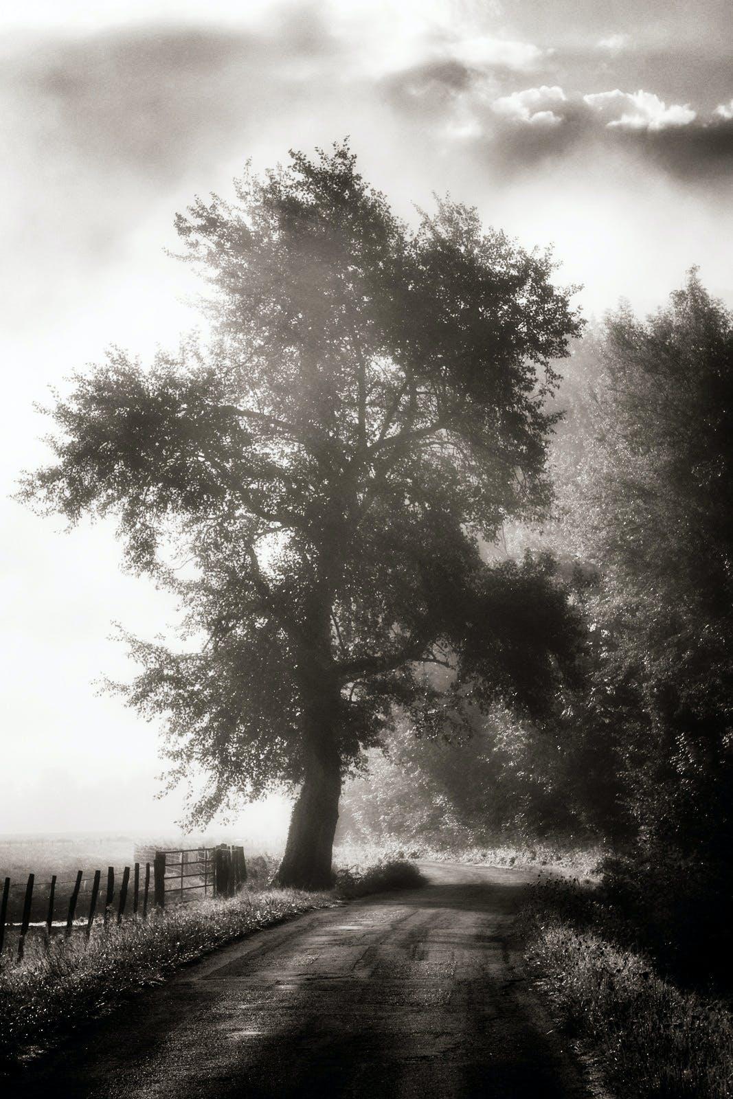 ダート, ミスト, 白黒, 道路の無料の写真素材