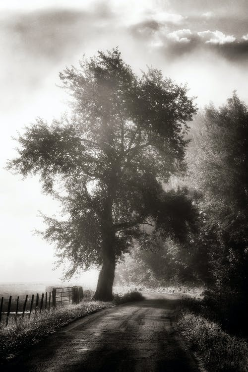 Black and White Photography of Tree