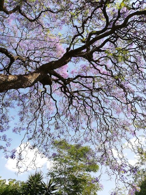 Gratis lagerfoto af blomstrende, grene, lilla, lilla blomst