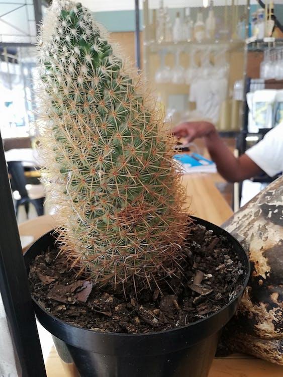 csupasz fa, gyárak, kaktusz