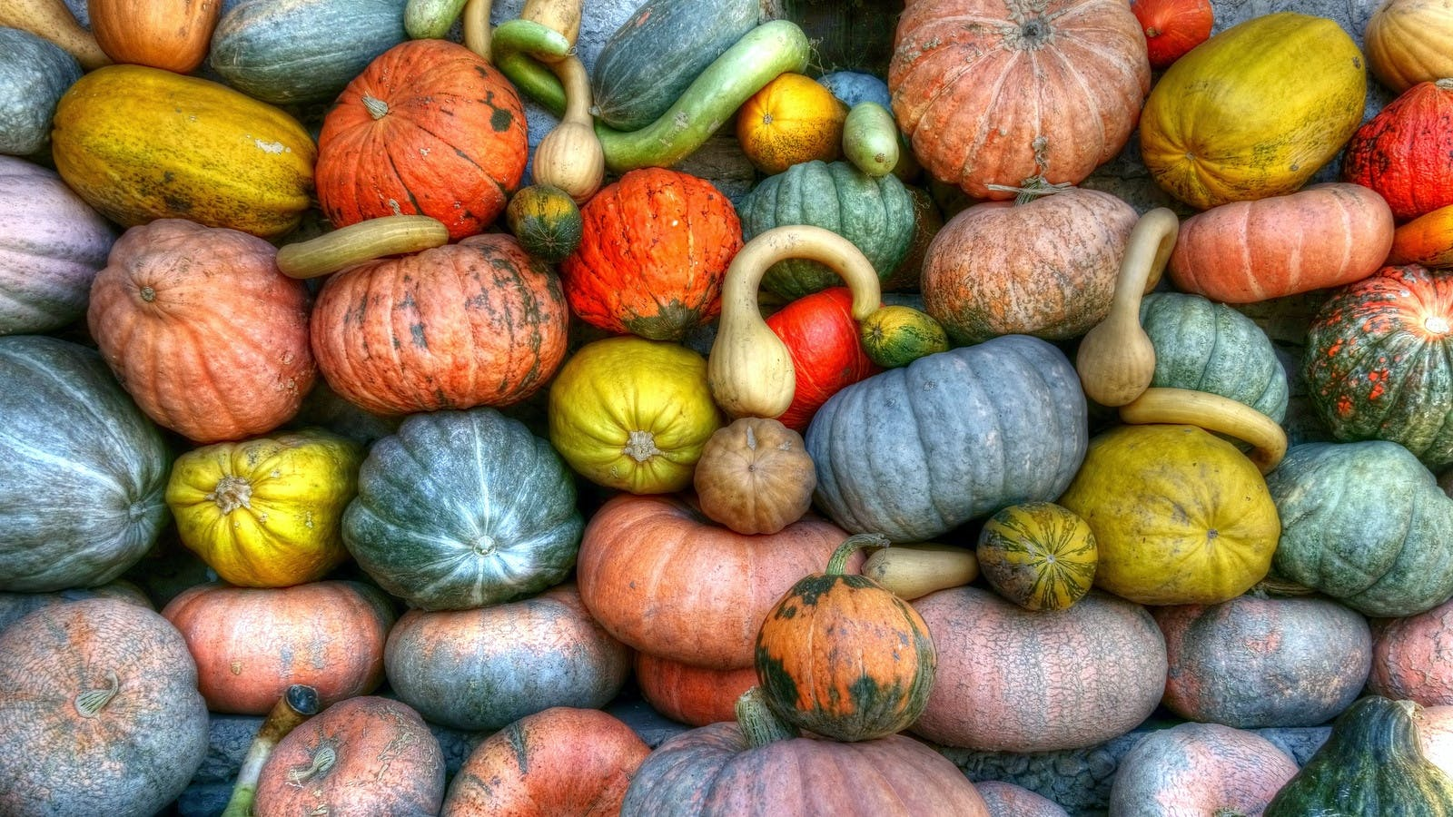 Green Orange and Yellow Pumpkins