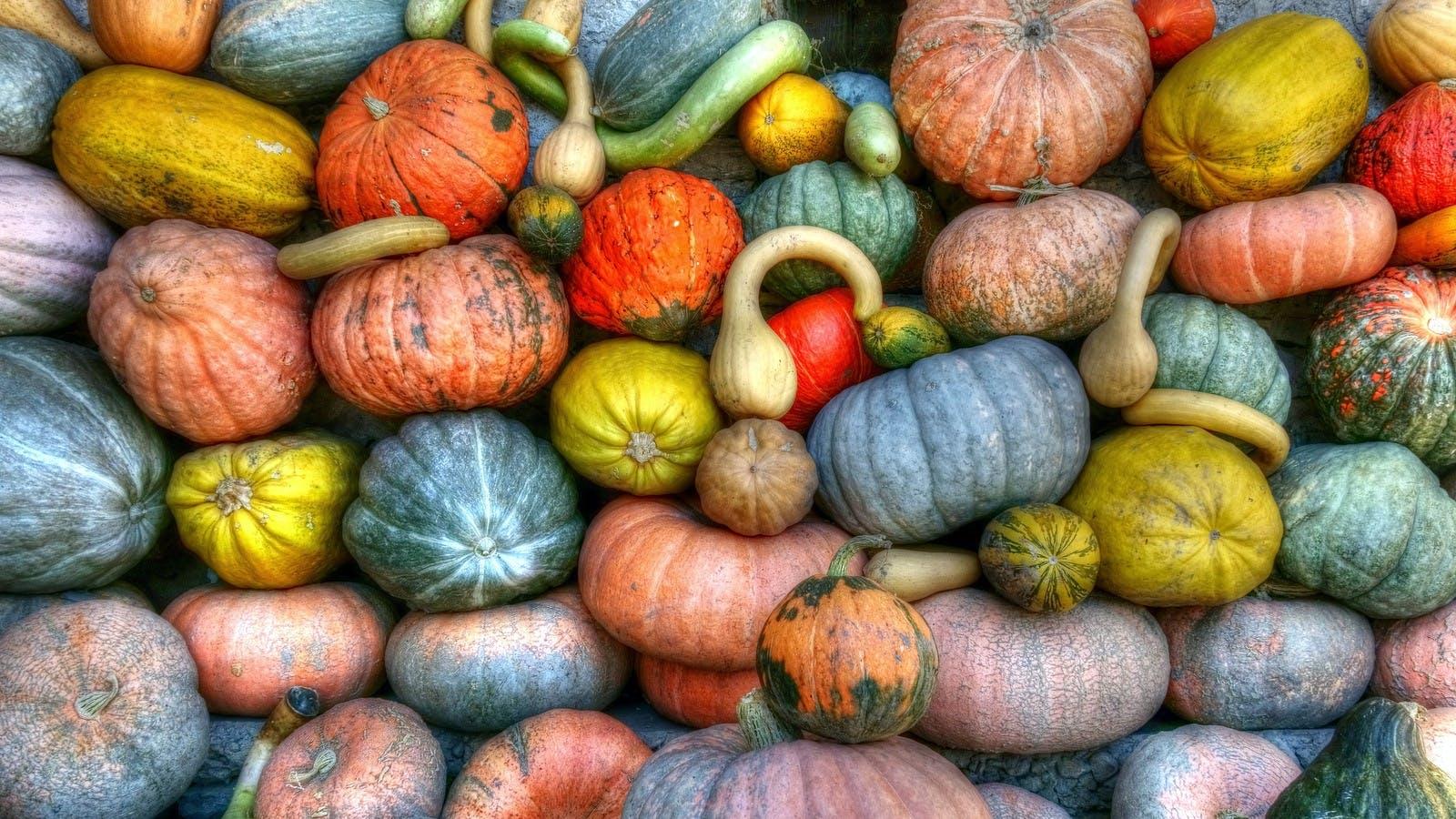 Gratis lagerfoto af afgrøde, frugt, græskar, grøntsager