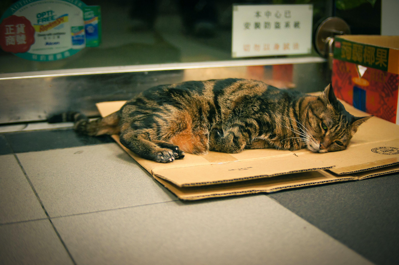 Free stock photo of cat, cute, sleep, street