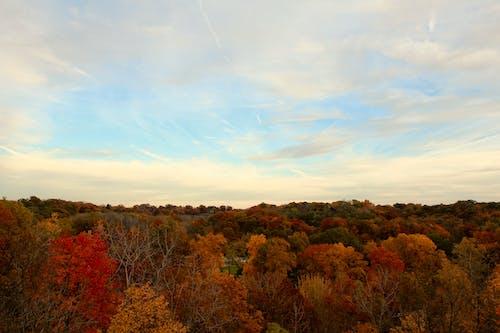 Ilmainen kuvapankkikuva tunnisteilla dramaattinen taivas, iltataivas, kaupungin puisto, puut