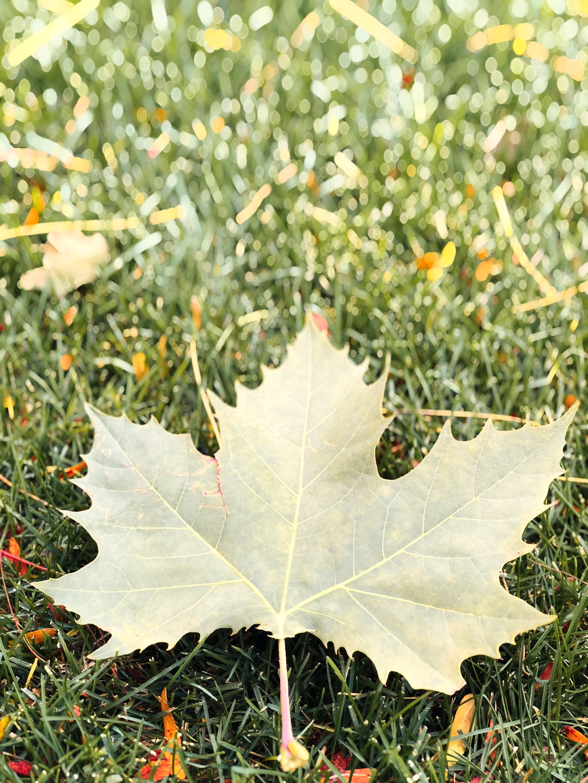 Δωρεάν στοκ φωτογραφιών με πεσμένα φύλλα, πτώση των χρωμάτων, πτώση φύλλων, φύση