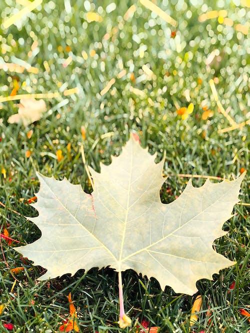 Základová fotografie zdarma na téma podzimní barvy, podzimní listí, podzimní listoví, příroda