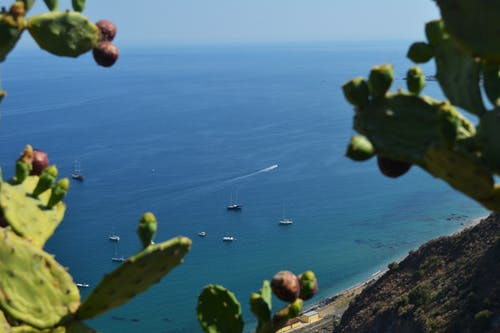 Free stock photo of boats, cactus, ocean, sicily