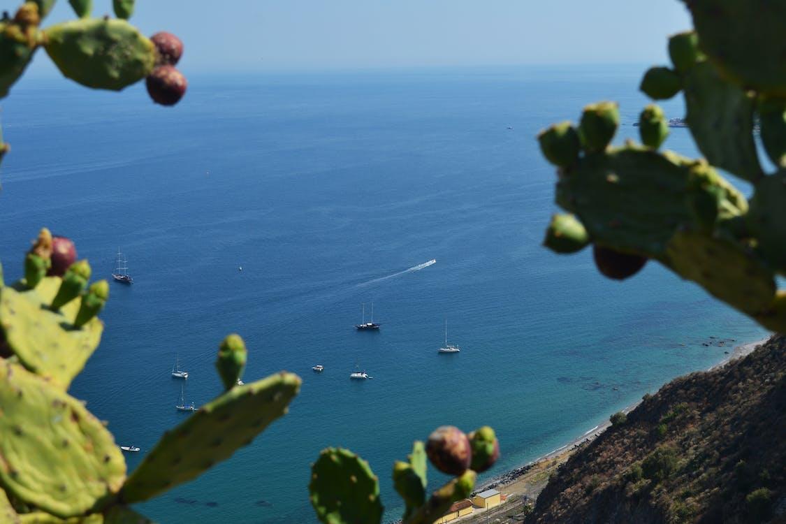 Fotos de stock gratuitas de barcos, cactus, Oceano
