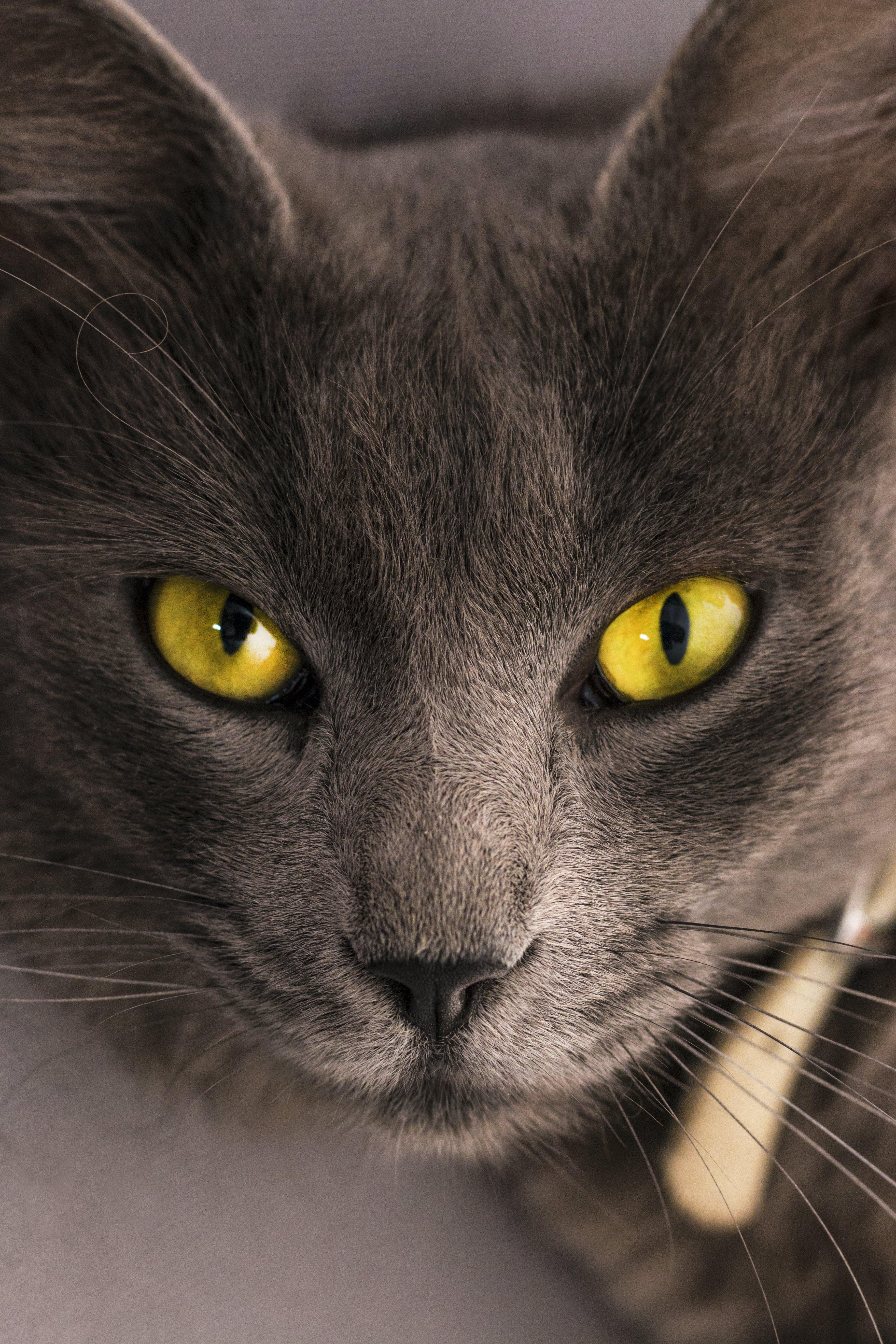 Black Cat Lying on Gray Surface