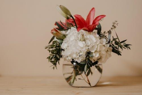 Imagine de stoc gratuită din aranjament floral, buchet, centrale, delicat