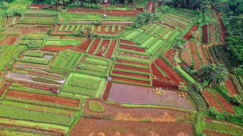 Foto stok gratis bidang, gelanggang, lahan, lahan pertanian