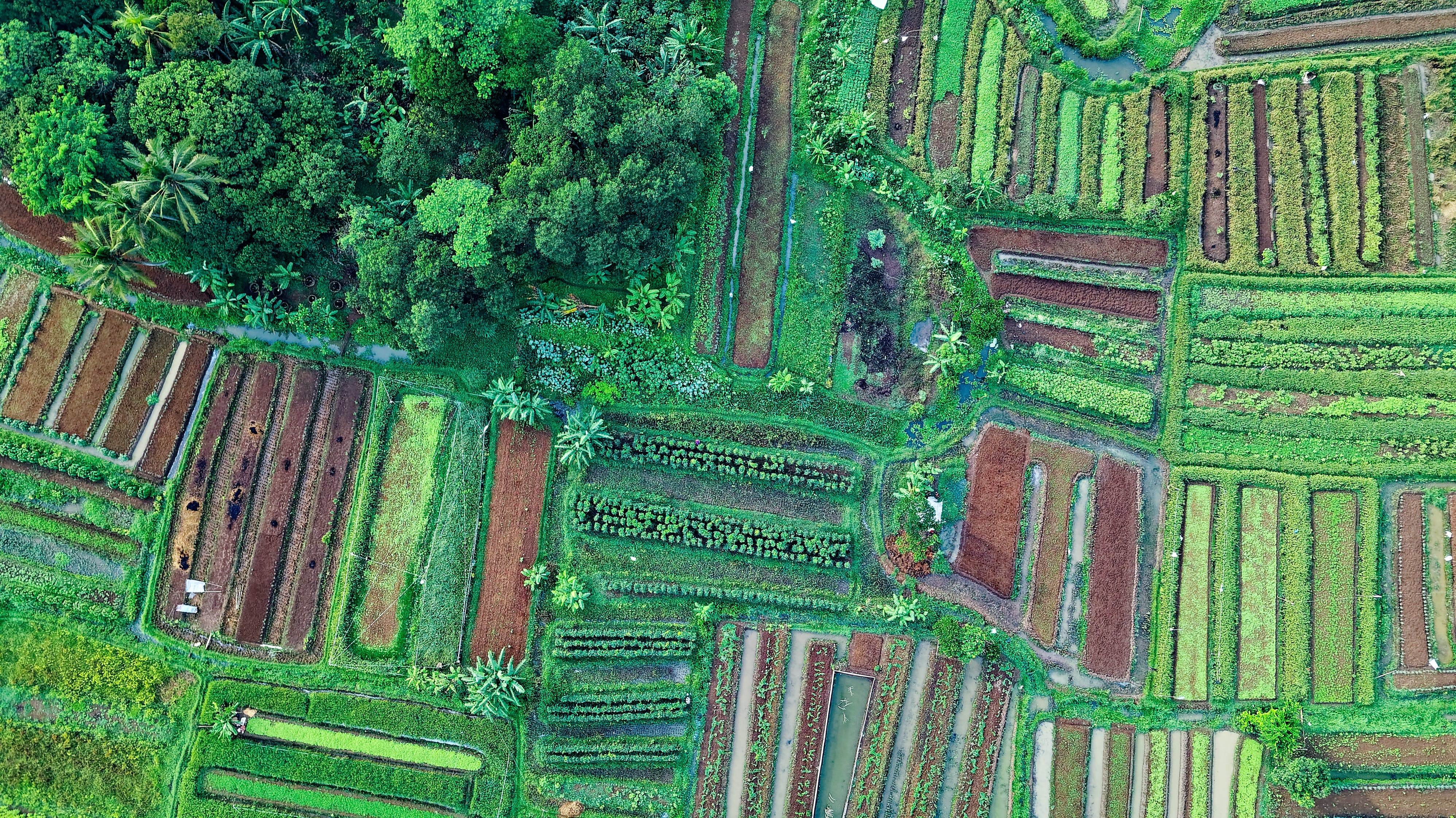 Top View Photo of Cropland