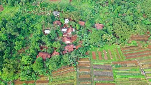 Základová fotografie zdarma na téma farma, indonésie, letecký snímek, orná půda