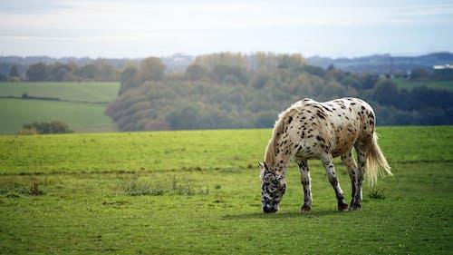 Безкоштовне стокове фото на тему «Денне світло, дерева, кінь, краєвид»
