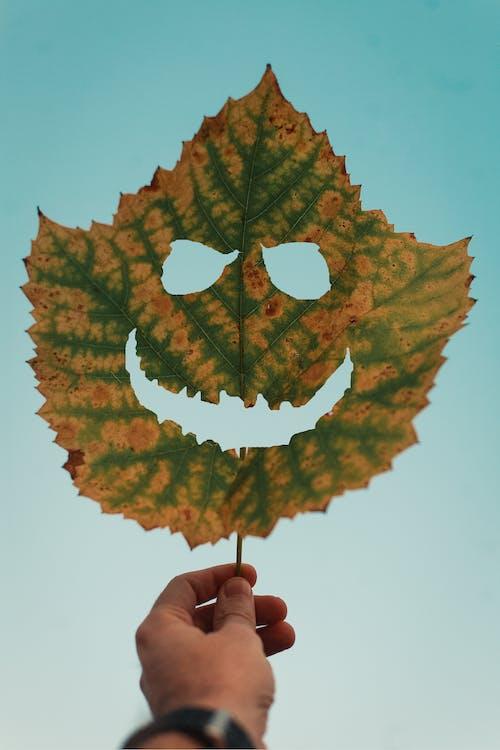 Бесплатное стоковое фото с держать, лист, осень, падать