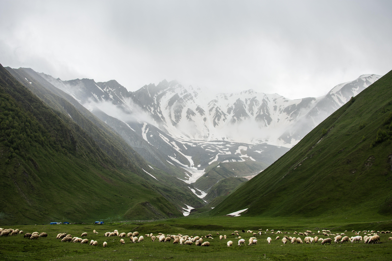 Herd of Animals on Grass Field Near Mountains