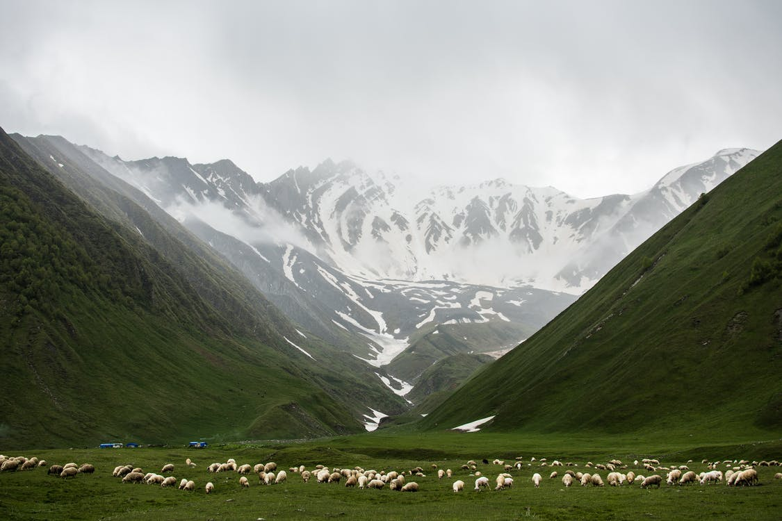 Herd of Animals on Grass Field Near Mountains