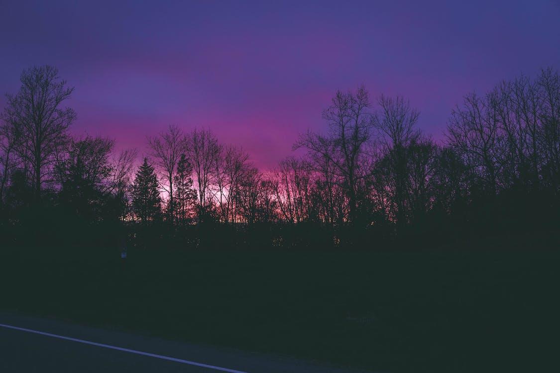 abend, bäume, dunkel