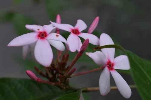 คลังภาพถ่ายฟรี ของ instaphoto, ดอกไม้, ดอกไม้สีชมพู, ธรรมชาติ