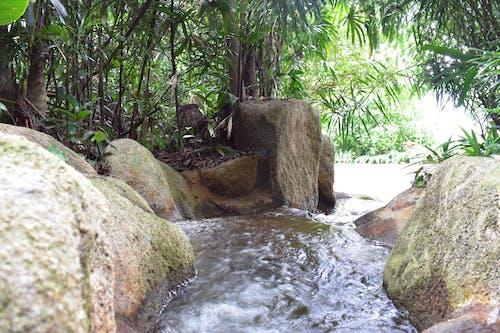 คลังภาพถ่ายฟรี ของ ต้นปาล์ม, ธรรมชาติ, น้ำตก, สวน