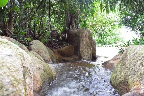 Бесплатное стоковое фото с водопад, зоопарк, пальма, природа