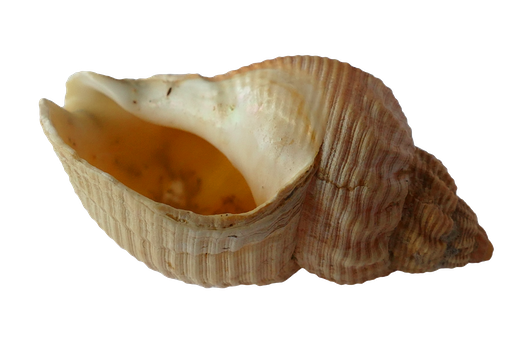 Free stock photo of blur, shell, focus, empty
