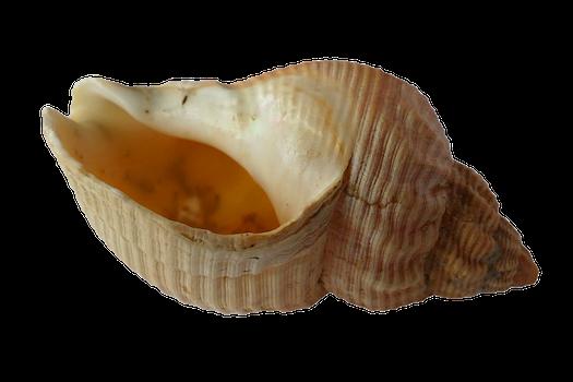 Free stock photo of sea, ocean, animals, shells
