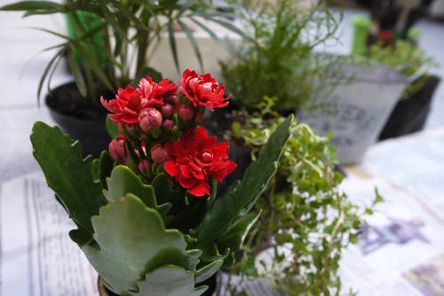 Free stock photo of flower, flower garden, garden