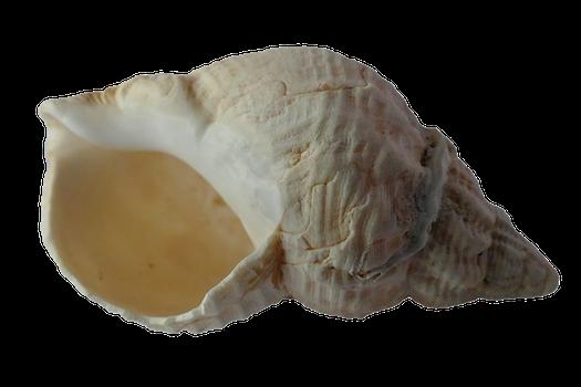 Free stock photo of sea, ocean, animal, shells