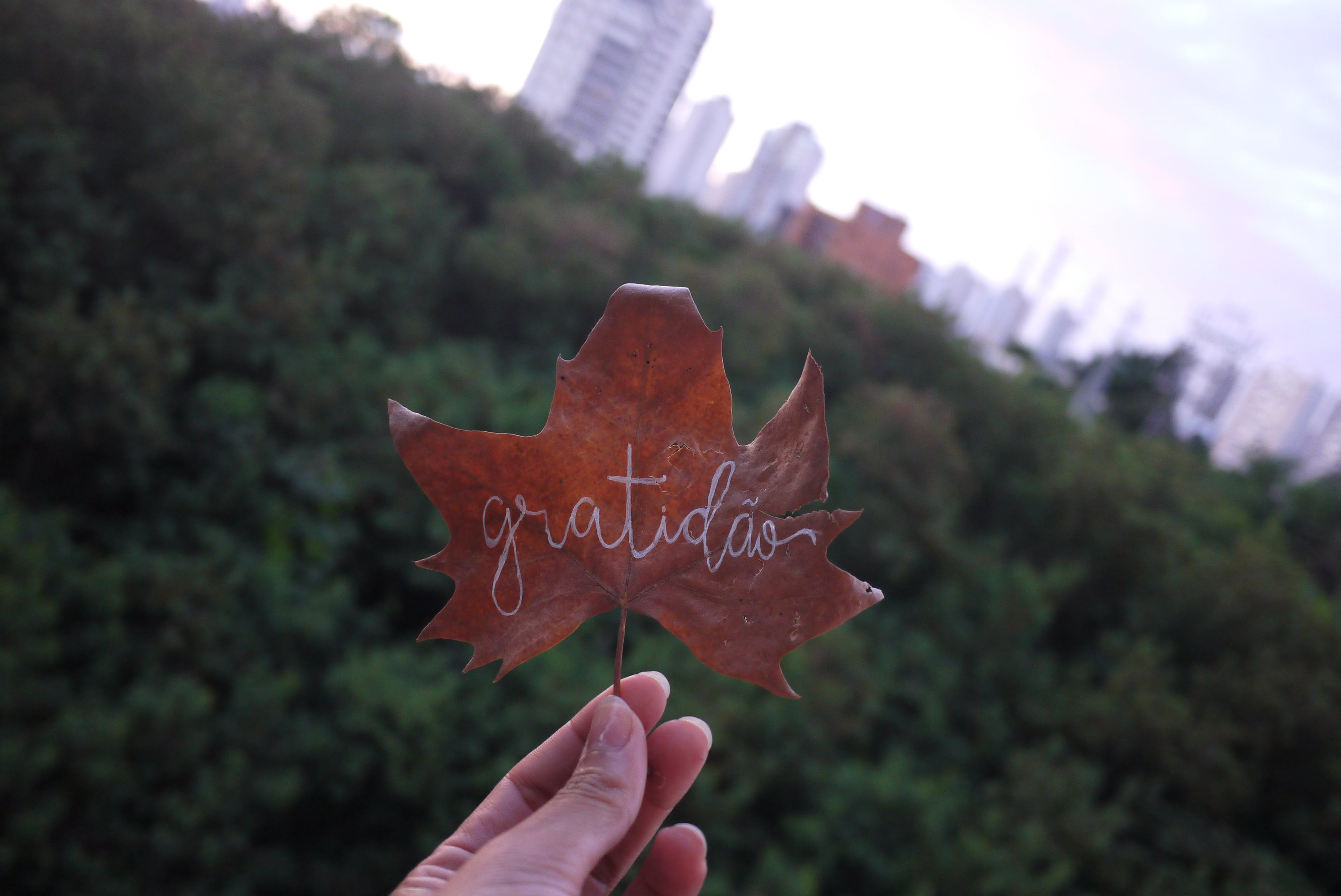 Free stock photo of hand, hand lettering, leaf, nature