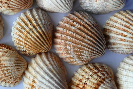 Free stock photo of nature, blur, focus, shells
