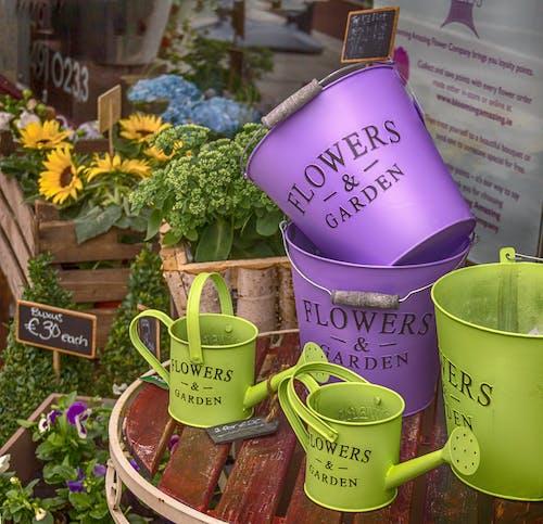 คลังภาพถ่ายฟรี ของ ถัง, ร้านดอกไม้, สีม่วง, สีเขียว