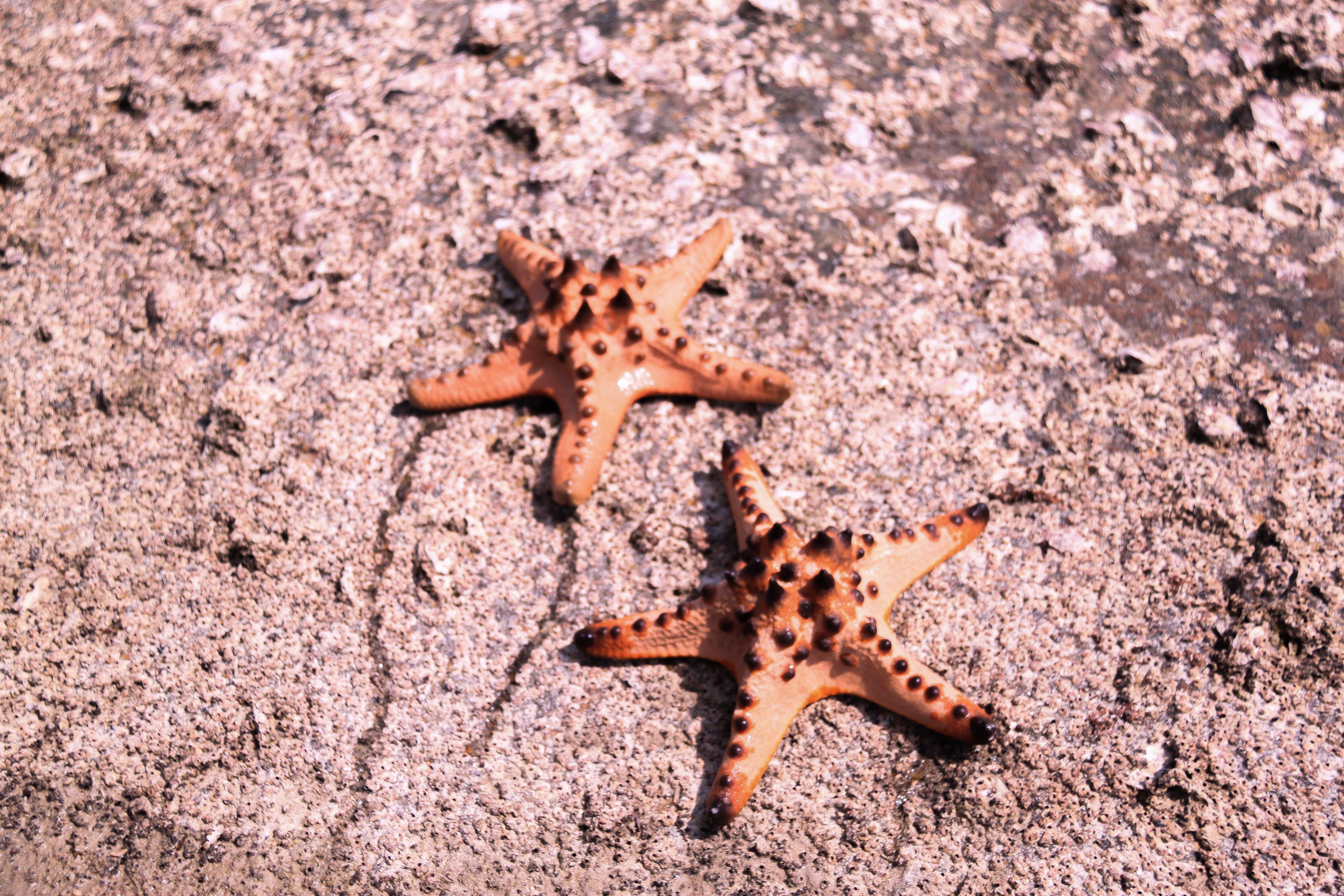Free stock photo of beach, couple, sea, starfish