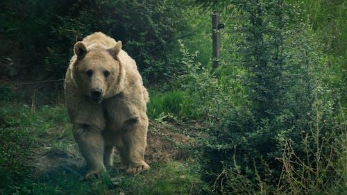 Gratis stockfoto met beer, dierentuin