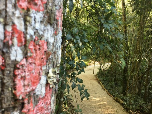 Fotos de stock gratuitas de caminho, camino, naturaleza, natureza