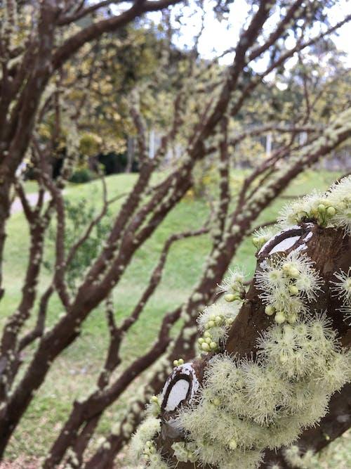 Δωρεάν στοκ φωτογραφιών με flor, verde, όμορφα λουλούδια, πράσινος