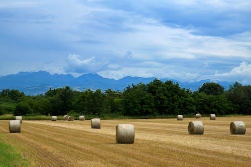 一捆一捆的乾草, 下田, 乾的, 乾草 的 免費圖庫相片