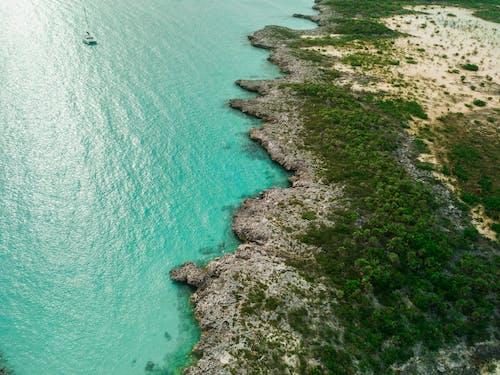 Foto profissional grátis de árvores, beira-mar, cênico, corpo d'água