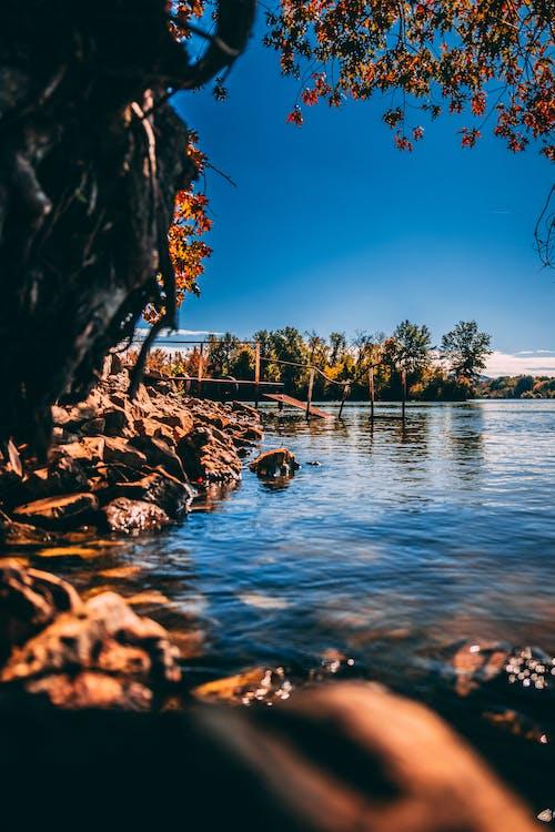 Imagine de stoc gratuită din apă, arbori, cadru, cer