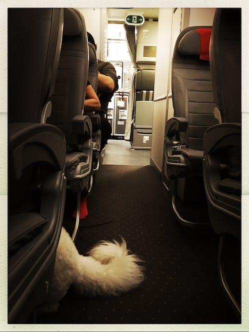 Бесплатное стоковое фото с поддержка животных, служебная собака, служебное животное, собака поддержки