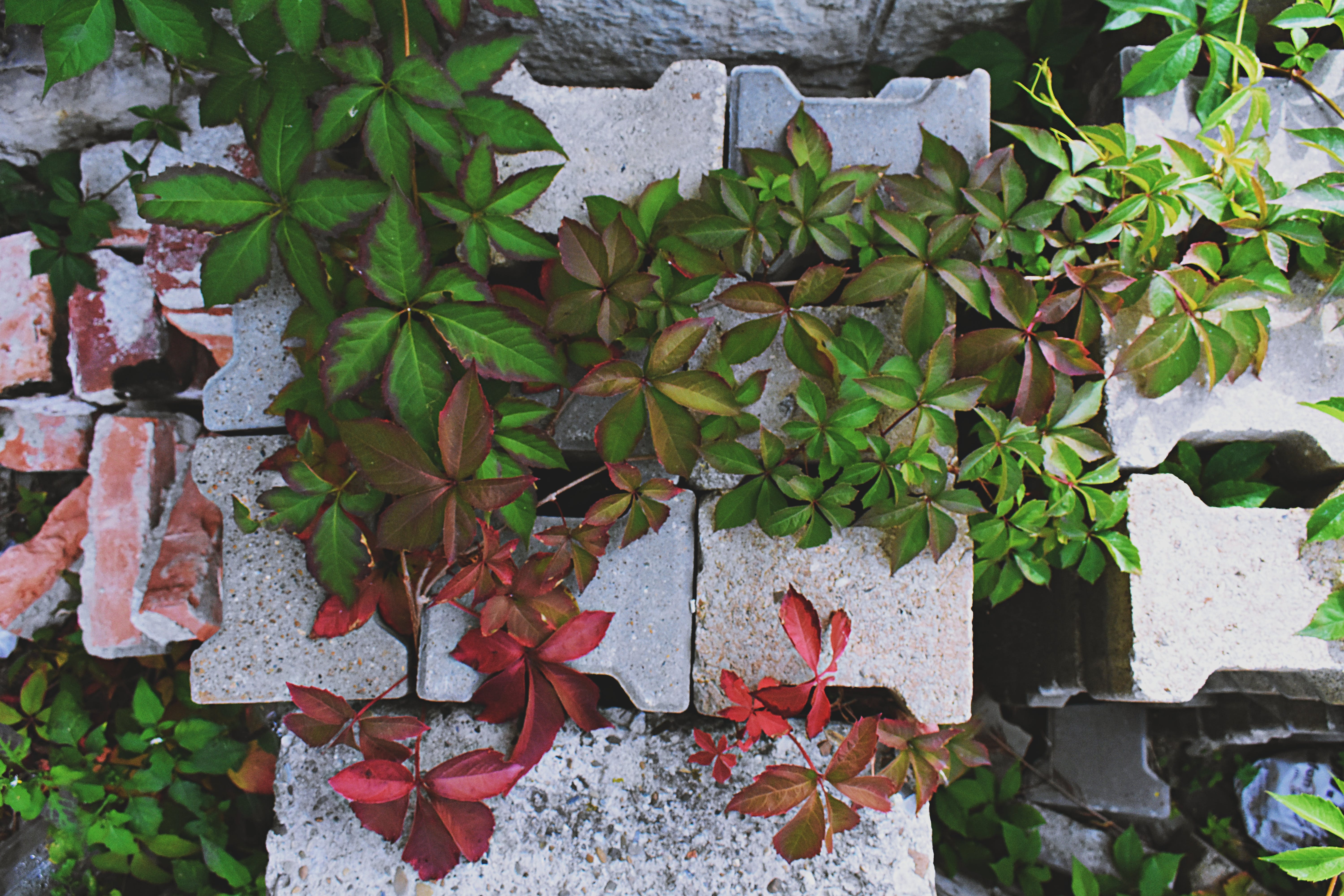 Brown and Green-leafed Plants on Bricks