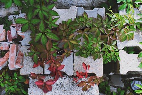 Безкоштовне стокове фото на тему «бетонні блоки, виноград, вирощувати, візерунок»