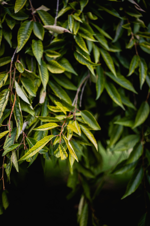 Immagine gratuita di ambiente, colori, crescita, foglie verdi