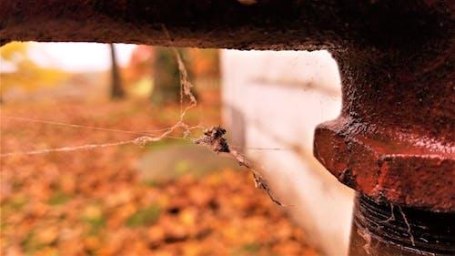 Gratis arkivbilde med edderkoppnett, fall tid, høstfarger, nærbilde