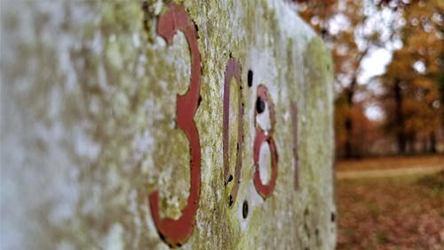 Gratis arkivbilde med fall tid, gammelt tegn, høstfarger, lav