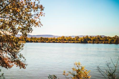Imagine de stoc gratuită din Alabama, apus, arbore, arborele de toamna