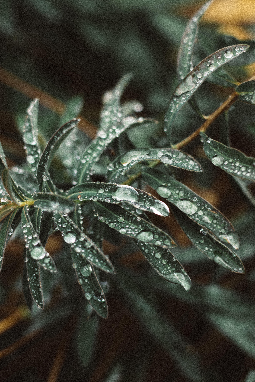 Free stock photo of water, leaves, rain, raindrops